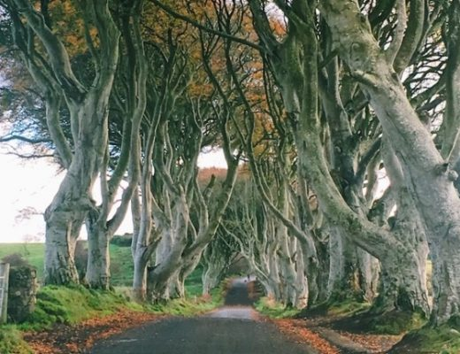 Foret penchée THE DARK HEDGES